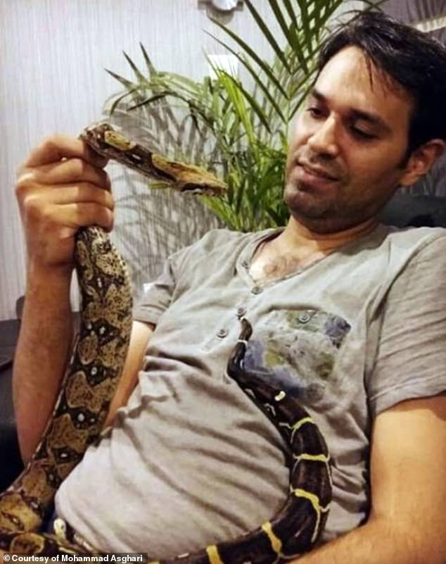 A job advertisement for a python hunter in Florida has attracted the attention of an Iranian manMohammad Asghari, (pictured), who used to catch snakes and play with them as a child