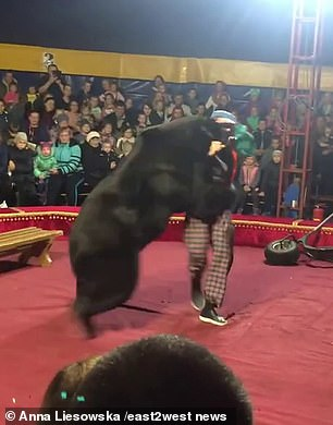 The bear relented from the attack soon after circus employees stunned it with an electric shock device. Parents said they were astonished at the lack of protection and guards between the circus floor and the children
