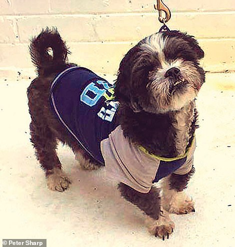 Fonzy the eight-year-old Maltese-Shih tzu cross was left in the care of a friend when her owners went on a long holiday