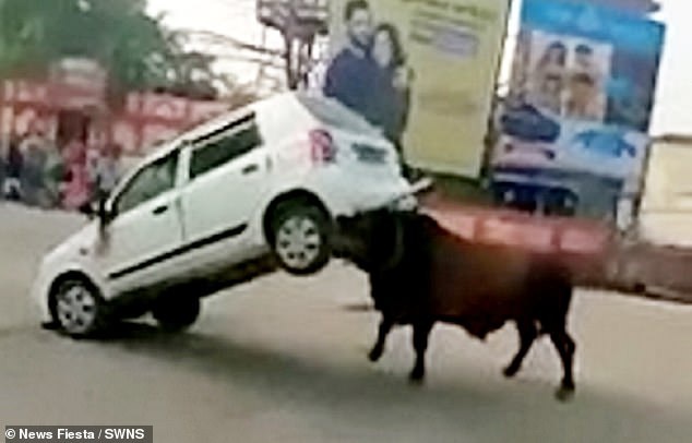 The bull turns the car 180 degrees using its horns as locals stayed a safe distance during the attack