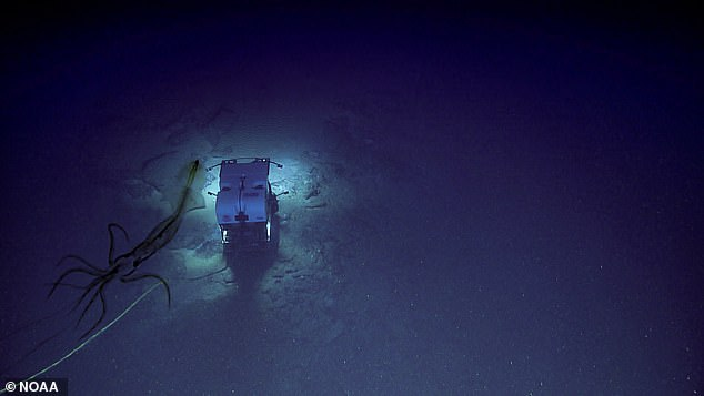 The National Oceanic and Atmospheric Administration shared an image of its remotely operated vehicle, Deep Discoverer, as it is being watched by a giant squid. The squid can be seen 'lurking' and 'creeping' above the vehicle while it explores the face of steep slope