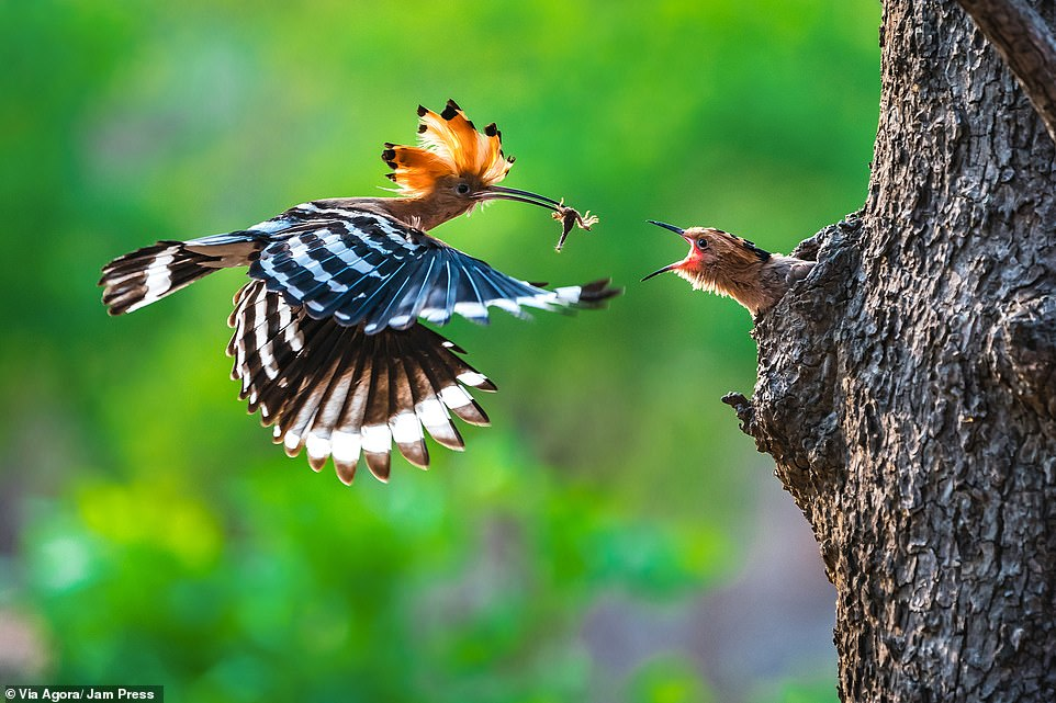 'Mother's goodness' by Phyo Moe: A baby bird opens its mouth as the mother returns with a catch in Myanmar