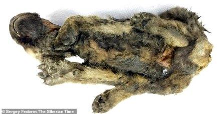 Ölüm nedeni tespit edilmedi ancak uzmanlar, genç canavarın Üst Paleolitik Çağ'da öldürüldüğü sırada sıkıntıda görünmediğini söylüyor