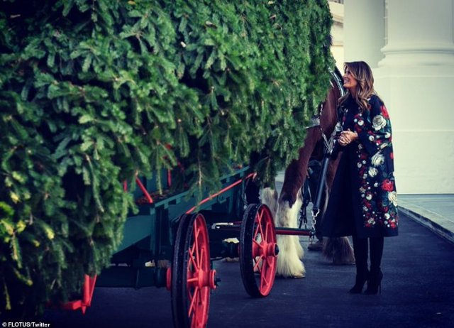 The official White House Christmas Tree is selected in an annual contest by the National Christmas Tree Association; this year's winning tree was presented by Larry Snyder of Mahantongo Valley Farms