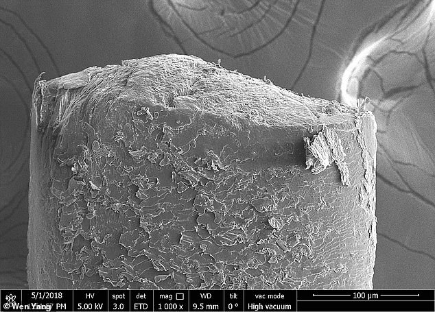 This image shows boar hair, which has a diameter of over 200 nm and breaks in a normal fracture. Researchers found that as thicker hair breaks more cleanly it can't withstand force for as long as thinner hair that breaks with cracks