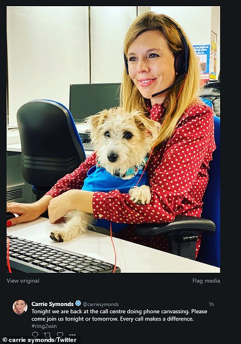 Carrie Symonds hunkered down in Tory HQ in Westminster making last-minute calls to voters with her adopted dog Dilyn