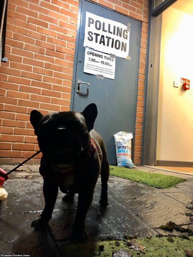 Another Twitter userLeanne Forshaw Jones posted this cute snap of her French Bulldog and said the most important job of the day was done