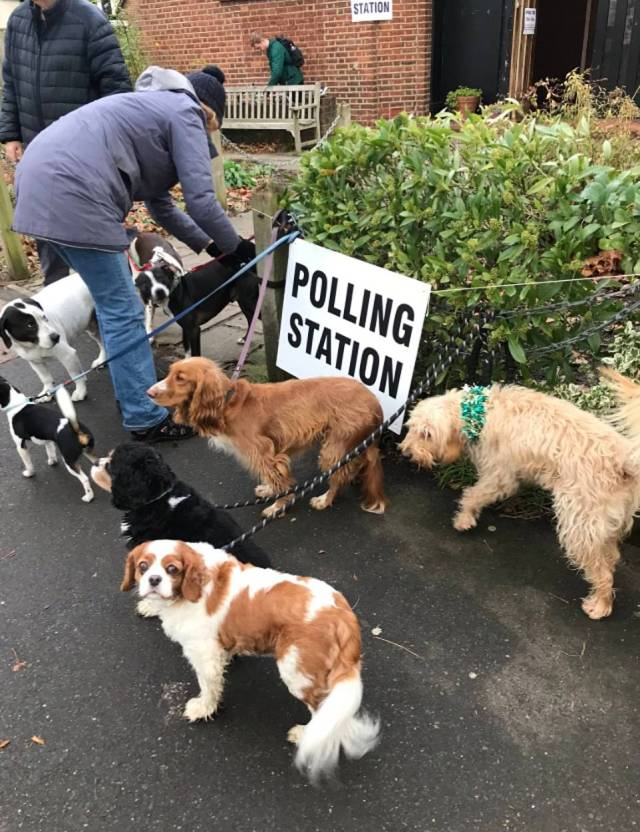 It's polling day and all the dogs have come out to play! These cute dogs were pictured being tied up outside a polling station