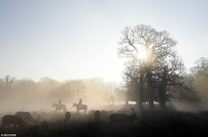 Deer are seen grazing as horses are ridden past in the early morning mist in Richmond Park, west London, on Monday