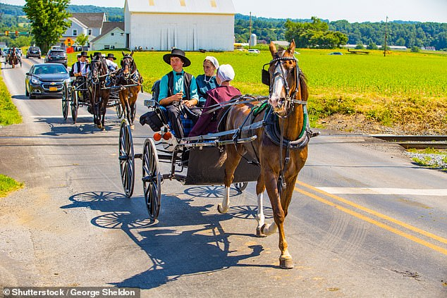 Mutation of RYR2 gene found in the heart muscle caused the organ to suddenly stop when the heart rate is elevated. It's only 25 percent likely a child would inherit the mutation from both parents however there's a limited gene pool in Amish communities, which increased the chances (stock image)