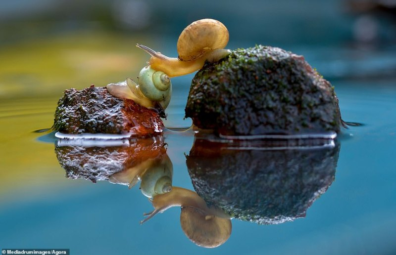 Indonesian snapper @san_san titled their image of snails leaning into each other across stones in the water 'Help Each Other'