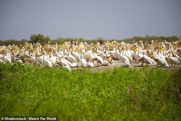 The Djoudj National Park in Senegal, pictured, is home to 400 different bird species
