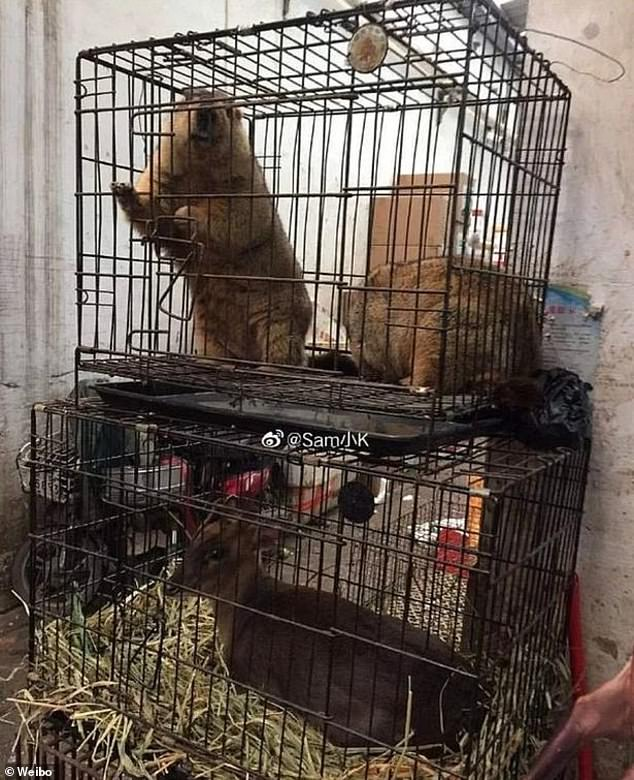 An undated photo shows beavers and a deer in cages at a food market in Wuhan