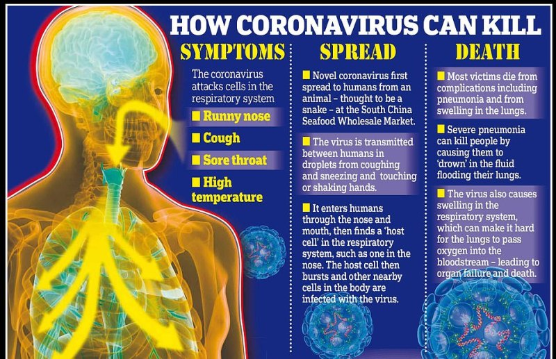 The coronavirus can lead to pneumonia, which can kill people by causing them to drown in the fluid flooding their lungs