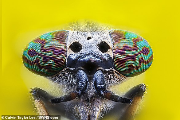 Pictured, a horsefly
