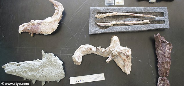 Remains of Tralkasaurus cuyi found in Río Negroincluded fragments of skull, teeth, ribs, hip and tail