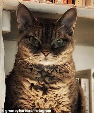 Killer instinct: The fierce feline has turned glaring at the camera into an art form