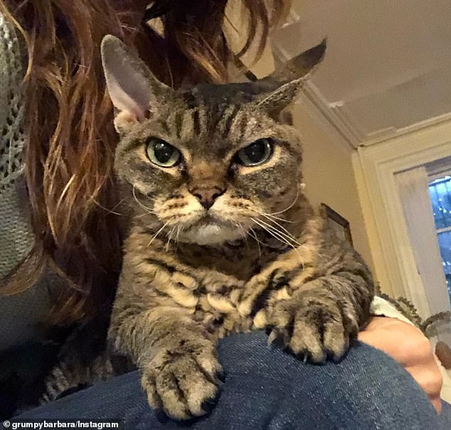 Popular: The cat's @grumpybarbara Instagram page is filled with a mix of photos of the feline glaring at the camera and cuddling with her doting owner