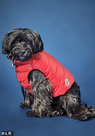 Rescue dog George looks snug