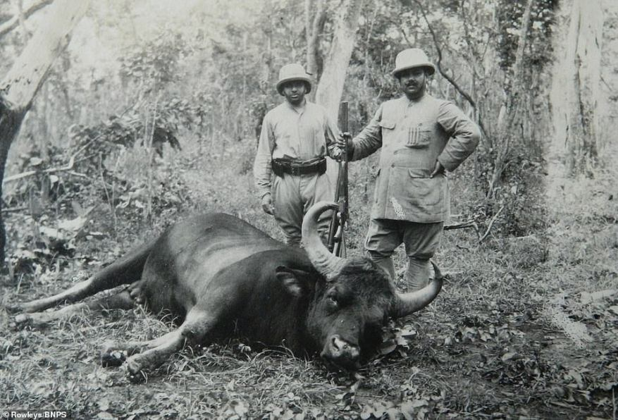 The black and white photographs from the turn of the 20th century until 1930s show soldiers of the Raj big game hunting.The 28th Light Cavalry was involved in what is still a relatively unknown part of the First World War