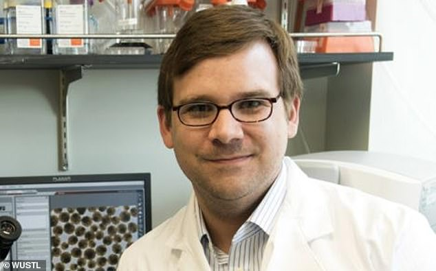 Principal investigator Dr Jeffrey R. Millman, an assistant professor of medicine and of biomedical engineering at Washington University revealed the important breakthrough