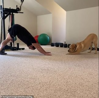 WATCH: Amazing Therapy Dog Works Out with his Owner by Holding his Legs Down and Acting as a Weight During Push Ups