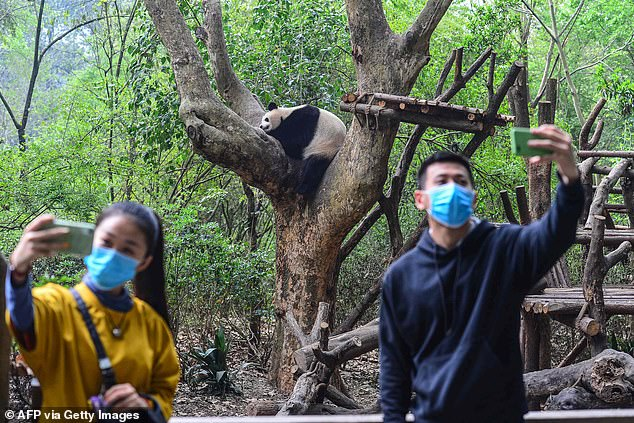 The staff members discovered the dead animals when they recently returned to the closed zoo, hoping to find the owner who hadn't paid their salaries since January. Visitors are seen taking selfies at the Chengdu Research Base of Giant Panda Breeding on Wednesday