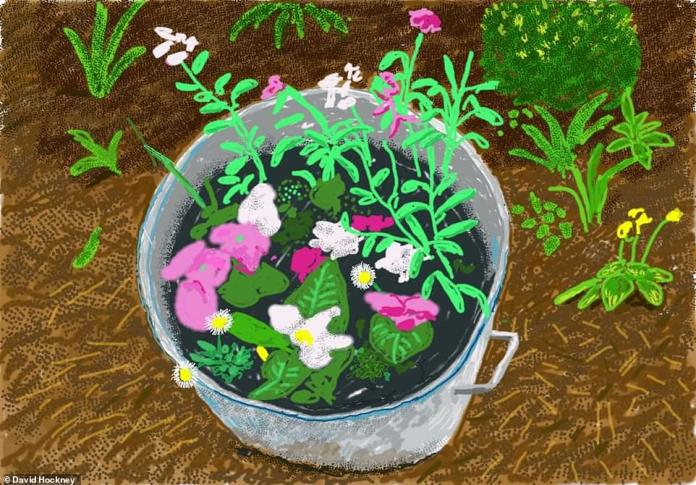 Pink and white flowers sit inside a metal bucket after being dug up from the garden.Hockney found a home with a large garden that was cheaper than anything he could find in Sussex so bought it and built a small studio