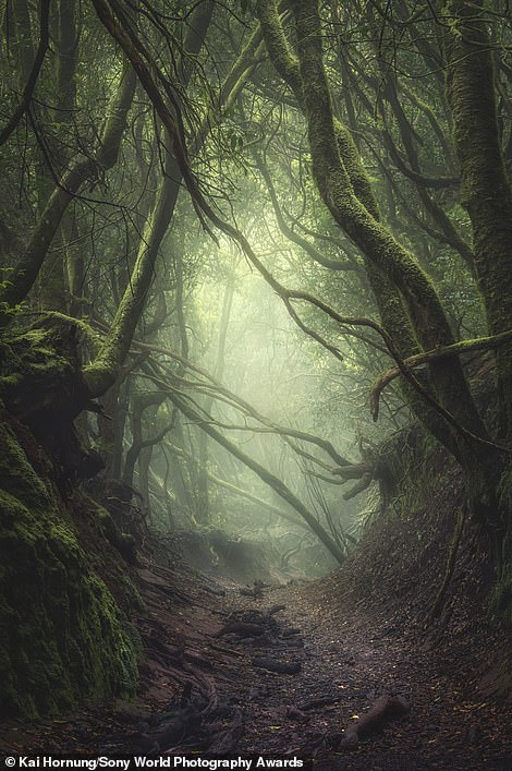 Shortlisted in the landscape category was this stunning image by German photographer Kai Hornung that shows an ancient forest in the Anaga Mountains of Tenerife. He said: 'The clouds hung inside the moss-covered trees, creating a spooky atmosphere. When I arrived at this spot I was smiling while setting up my tripod - I just knew I was about to take one of my best images of that tour, if not one of my best pictures of 2019'