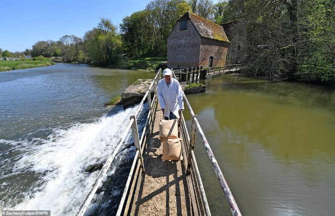 Pictured: Flour being churned out at the mill in Dorset as it enters commercial use once more amid the Covid-19 pandemic