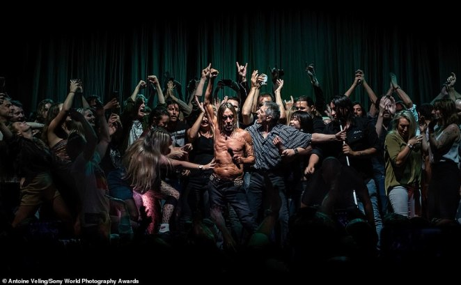 Australian photographer Antoine Velig was the winner of the culture category with this image taken at an Iggy Pop concert at the Sydney Opera House last year. He said: 'A woman's outstretched arm lunges to touch Iggy. He seems unaware of her approach as the crowd presses around him. One of Iggy's assistants, Jos (in the grey checked shirt), tries to make some space around Iggy. The image has been likened to religious paintings by Caravaggio and his chiaroscuro technique. It went crazy on social media, making 40,000 people, including Iggy Pop, very happy'