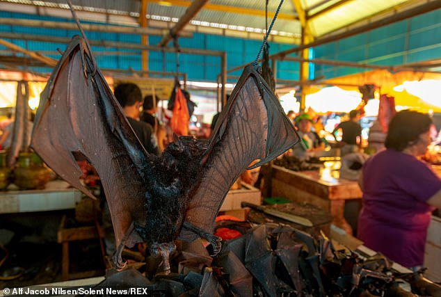 A food market shows rows of rows of dead animals, some of which have been beaten to death, including bats