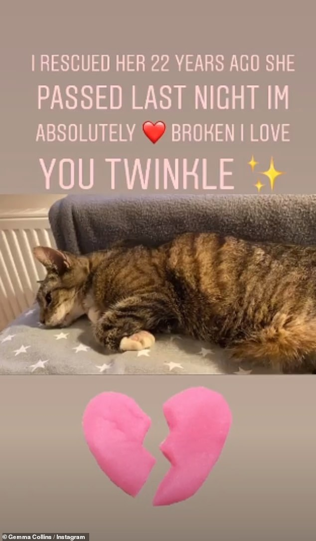 Devastated: The former TOWIE star, 39, opened up about his cat's last moments and said that she had put on a ventilator by a veterinarian before it dying later in the day