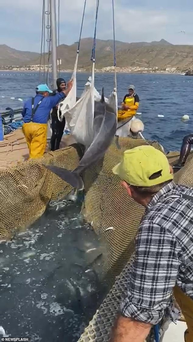 They eventually lifted the 200 kilogram dolphin into the air and moved it into the open water