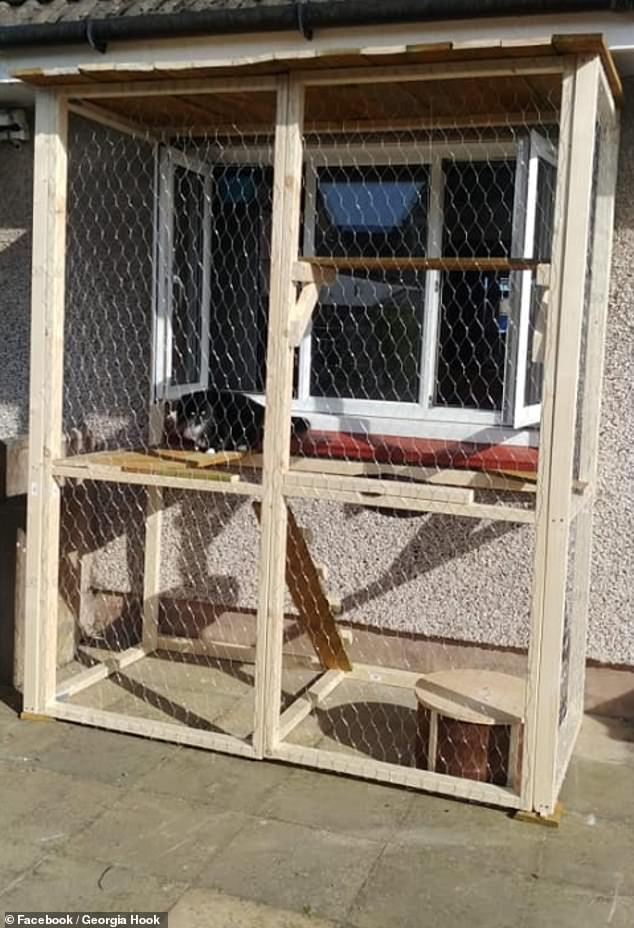 cat patio on his kitchen window