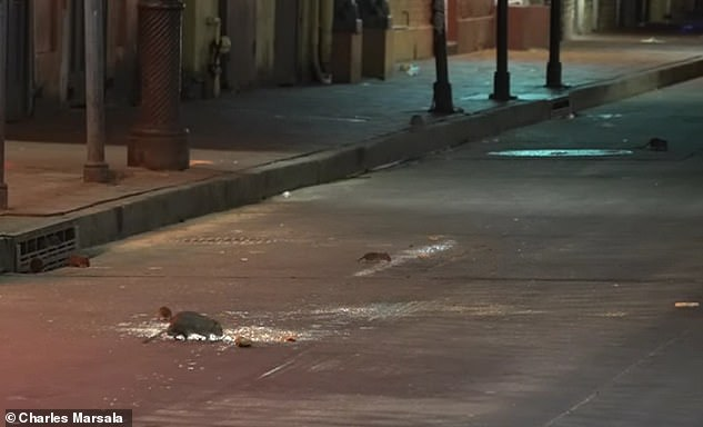 Last year in New Orleans, viral videos emerged swarms of rats invading roads and sidewalks in generally bustling neighborhoods like the French Quarter (pictured)