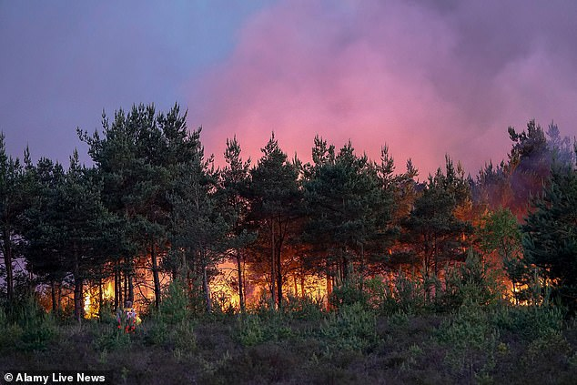 Police evacuated homes after a fire broke out on Saturday on Thursley Common in Elstead, Surrey (pictured)