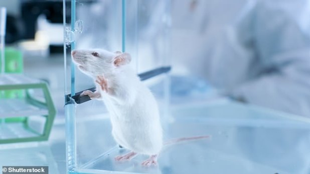 Mice in the lab that were exposed to two hours of blue light at night for several weeks showed depressive-like behaviour - as measured by reduced escape behaviour and decreased preference for sugar