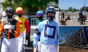 Horse, greyhound and pigeon racing returns today - but with events ...