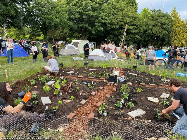 People work in a garden inside an area called by protesters the Capitol Hill Autonomous Zone (CHAZ) in Seattle