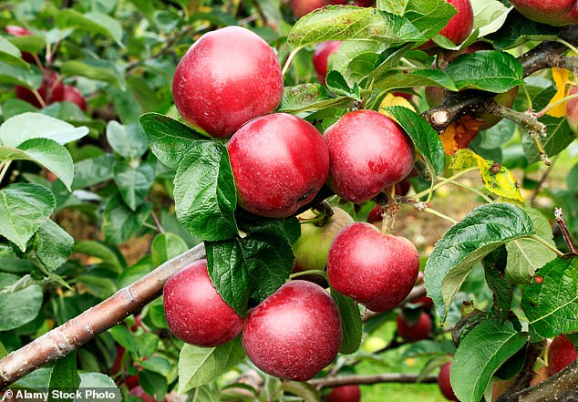 Apples were found to be the most contaminated fruit in the study, while carrots were found to be the most contaminated vegetables