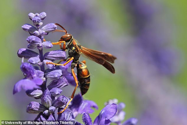 The results suggest that even mini-brained insects, like the paper wasp,  have the capacity to learn remember and make conclusion about others