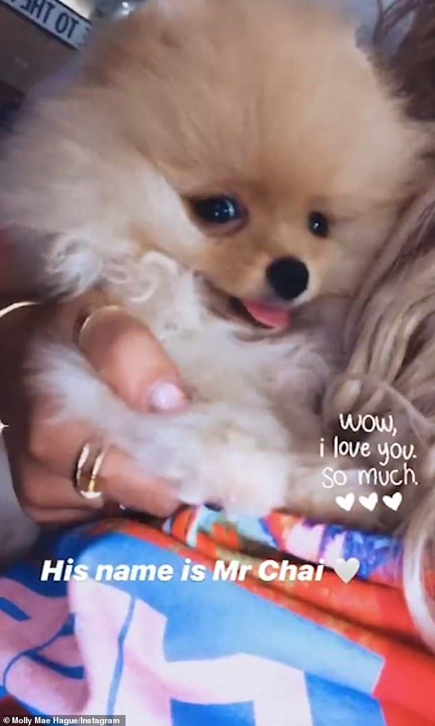 With love from Russia: Love Island star Molly-Mae's late puppy Mr Chai was gifted to her by boyfriend Tommy Fury as a birthday present