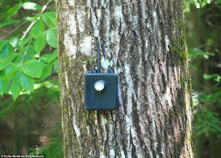 Un capteur de mouvement peut être vu sur l'arbre, sur l'approche de la propriété