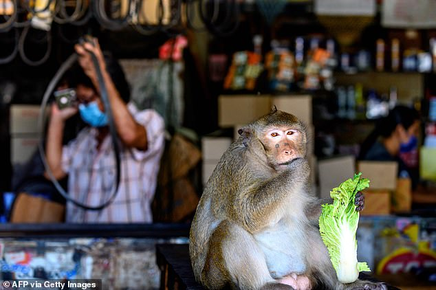 Waitrose has stopped selling coconut products from Thailand after it emerged some products used slave monkey labour to harvest the fruit. Pictured: A macaque eats a piece of Chinese cabbage outside a shop in Lopburi, Bangkok