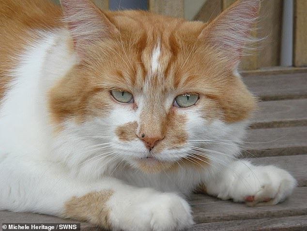 Rubble beat Scooter's record , a 30-year old Siamese Texas cat who died in 2016. The fluffy moggy died just before reaching 32