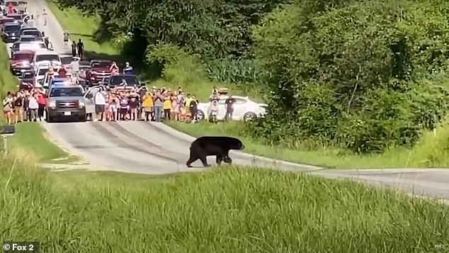Over Father's Day weekend last month, more than 300 people in Illinois' Henderson County gathered to watch Bruno - prompting concerns from wildlife officials