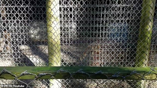 Standing their ground:The zoo owners refused to comment on the matter when approached by the outlet but did quip that they had been 'harassed' by the zealous animal rights group for over 30 years