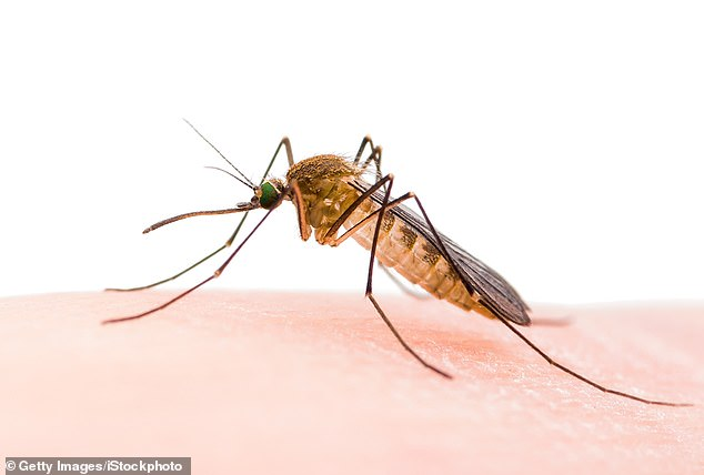 New York City has detected its first cases of West Nile Virus this year, the Health Department said on Tuesday