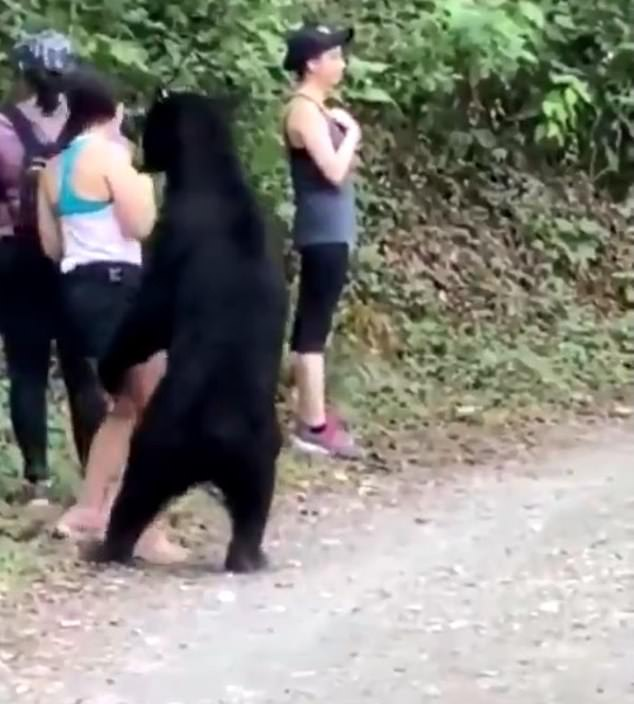 A group of hikes were forced to remain calm where a black bear approached them at Chipinque Ecological Park in San Pedro Garza García, Mexico (pictured)